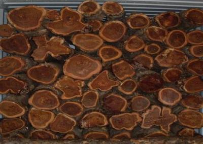 Plantation Grade Logs