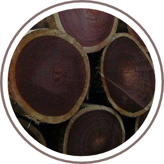 Teak Wood Logs - Faith Lumber
